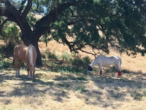 Miss & Josh under the tree. It was her last time. 5.16.17